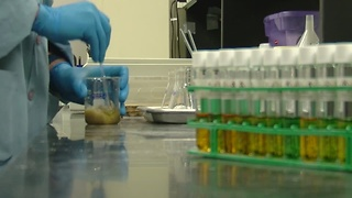 Lead labs flooded with testing requests - Video