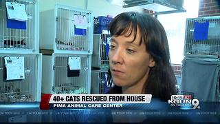 PACC rescues 38 cats from hoarder