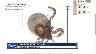 South Milwaukee Health Department issues tick warning