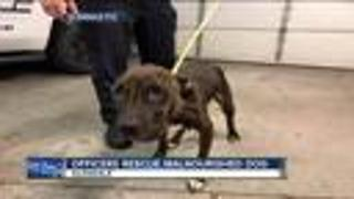 Officers rescue malnourished dog - Video