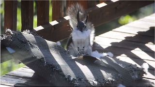 Squirrel pulls off classic Santa Claus impression - Video