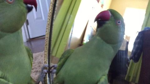 Parrot carries deep conversation with mirror reflection