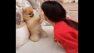 sweet Pets Cute And Funny Animals