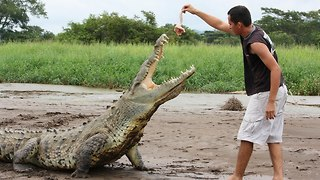 Crocodile Feeding Time: Tour Guides Come Within Inches Of Deadly Crocodiles - Video
