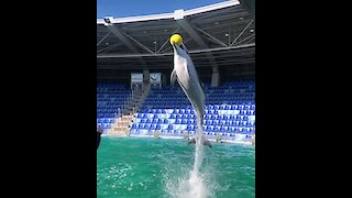 What This Trained Dolphin Does In Slow Motion Will Totally Blow Your Mind