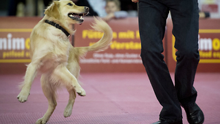 Dancing Dogs - Video