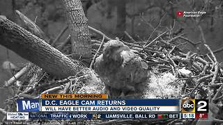 D.C. Eagle camera returns with upgrades - Video