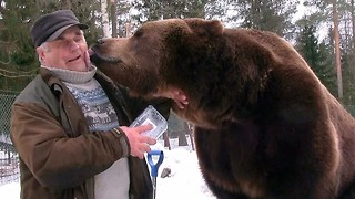 Bear Man Of Finland Has An Unbreakable Bond With Brown Bears - Video