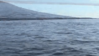 Orca Stuns Tourists by Tossing Sea Turtle Out of Water - Video