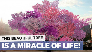 Beautiful Tree - Video
