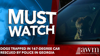 Dogs trapped in 167-degree car rescued by police in Georgia - Video
