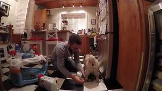 Elf-Dressed Dog Wears Delightful Diaper - Video