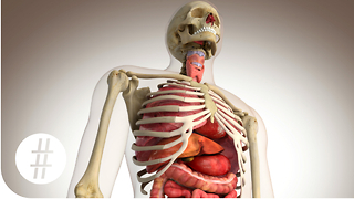 The Human Body In Numbers - Video