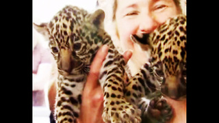 Tiny Jaguar Triplets - Video