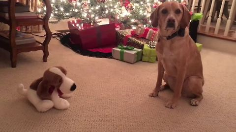 Dog terrified of 'Jingle Bells' theme from singing toy dog
