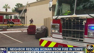 FD: 2 dogs dead after fire at Tempe apartment - Video