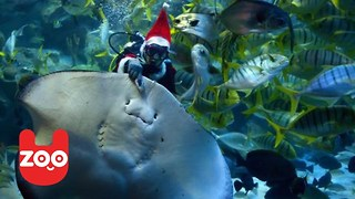 Santa Swims with Stingrays in Tokyo for Christmas - Video