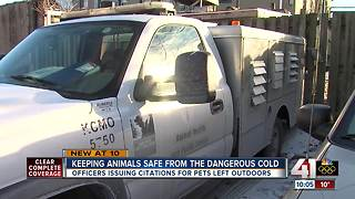 Animal control officers rescue animals from cold - Video