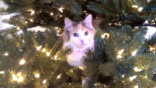 These Cats Climbing And Destroying Christmas Trees Hurts Us Deeply - Video