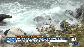 Marine life being killed by toxic event - Video