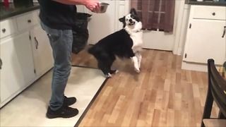 Hungry dog demands dinner with epic dance moves