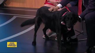 Pet of the week: Dixie is a 3-year-old Labrashepherd who needs a forever home - Video