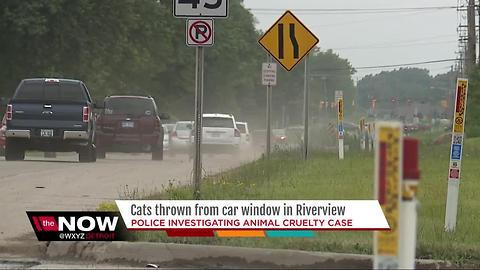 Cats thrown from car window in Riverview