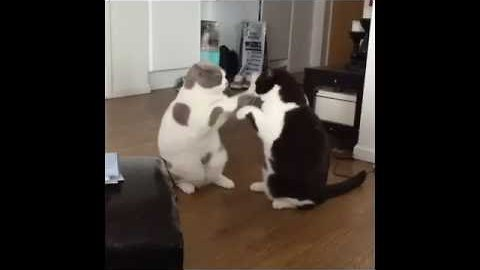 Two Cute Kitties Play Patty-Cake