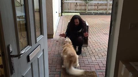 Dog Gets Ready For Big Surprise, Can't Hold Back Excitement When She Sees It
