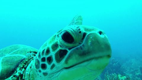 Sea Turtle takes a bite out of diver's GoPro