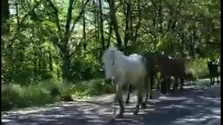 Over 50 horses passing through town cause road block - Video