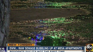 Raw sewage spilling onto sidewalk of Mesa apartment - Video