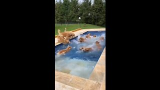 See the greatest pool party ever 😃
