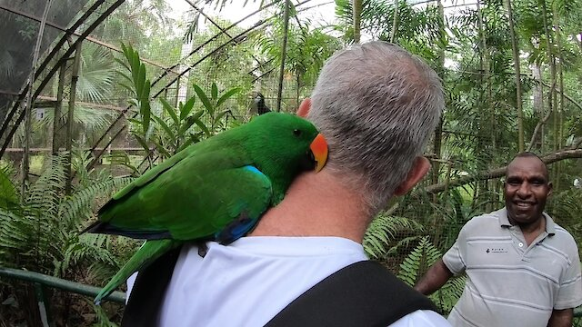 Parrot takes serious liking to visitor at nature park