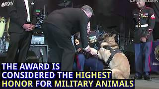 This veteran dog received a Medal of Honor, but it came with a price.  - Video