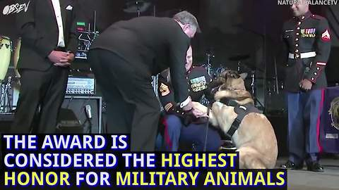 This veteran dog received a Medal of Honor, but it came with a price.
