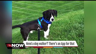 New app finds dog walkers in Indy - Video
