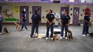 Pups on Parole helps rehabilitate dogs, inmates at Las Vegas prison - Video