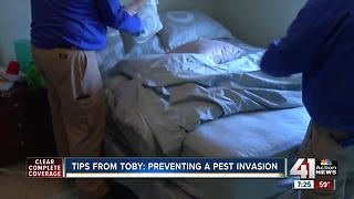 Tips from Toby: preventing a pest invasion - Video