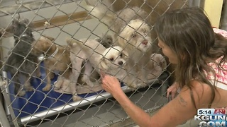 How to avoid being a victim of holiday puppy scams - Video