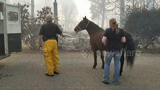 Horse rescued from deadly Californian Camp Fire - Video