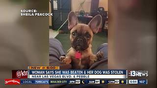 Woman says robbers stole her pregnant bulldog - Video