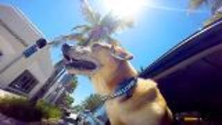 Miami Beach Florida Doggie Cam - Video