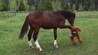This Horse Loves Playing With Stuffed Animals! - Video