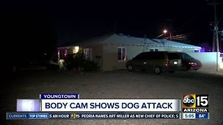 VIDEO: Dog attacks MCSO K9 Tarzan - Video