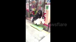 Dog rides rocking horse in China - Video