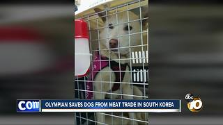 Olympian saves dog from meat trade in South Korea - Video
