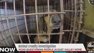 MCSO investigating animal cruelty case at East Valley home - Video