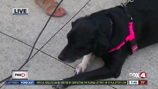 Pet of the week: Bella - Video