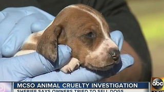 MCSO investigating animal cruelty case involving various animals - Video